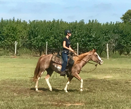 Logging Hours with Freckles..a.k.a. Hubby's Mare